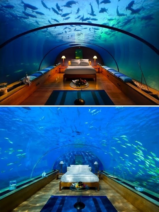 Best Dreaming Of Palm Trees Underwater Hotel With Pictures