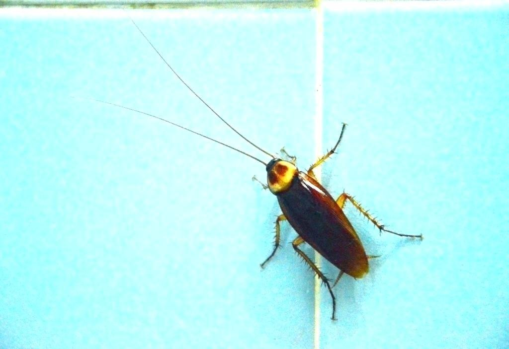 Best Tiny Brown Flying Bugs In Bedroom Wallpaperall With Pictures