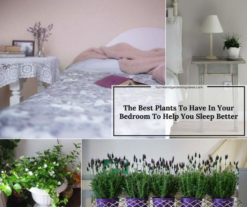 Best The Best Plants To Have In Your Bedroom To Help You Sleep With Pictures