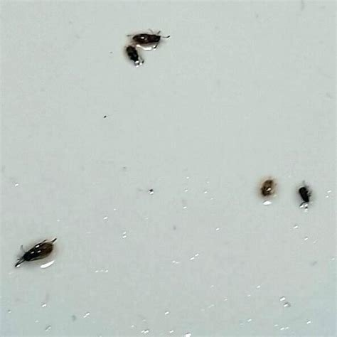 Best Small Round Black Bugs In Bedroom Wallpaperall With Pictures