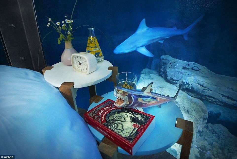 Best Airbnb Launches Its First Underwater Bedroom Where Guests Are Surrounded By Sharks Daily Mail With Pictures