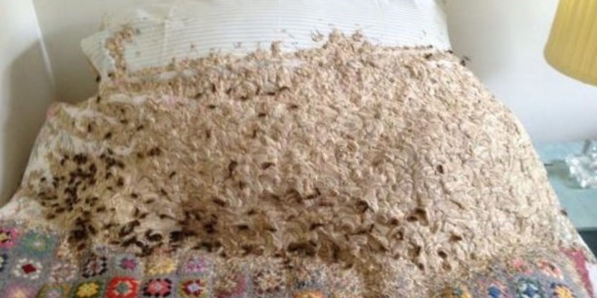 Best Giant Wasps Nest Discovered On Woman S Guest Bed Huffpost With Pictures