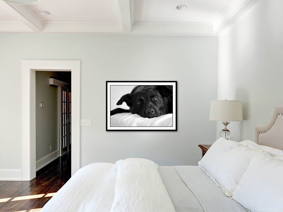 Best Custom Wall Art – Paws Prints Pet Photography – Modern With Pictures