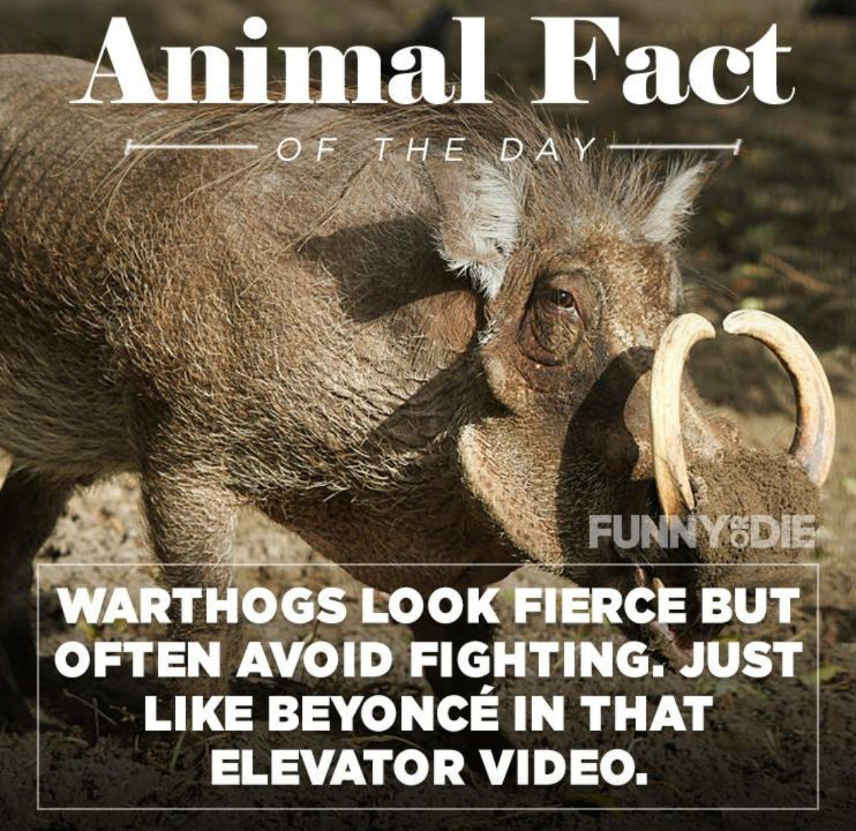 Best 25 Funny Animal Facts That Might Make You P** A Little With Pictures