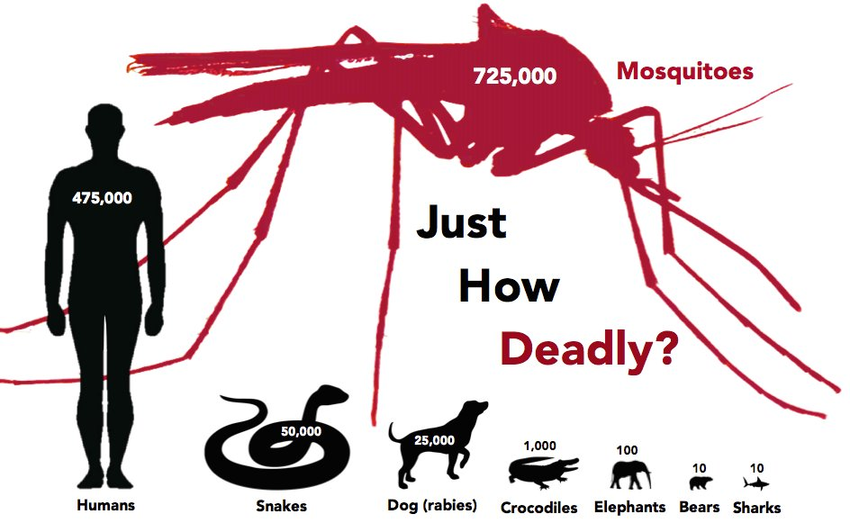 Best 9 Interesting Facts About Mosquitoes With Pictures