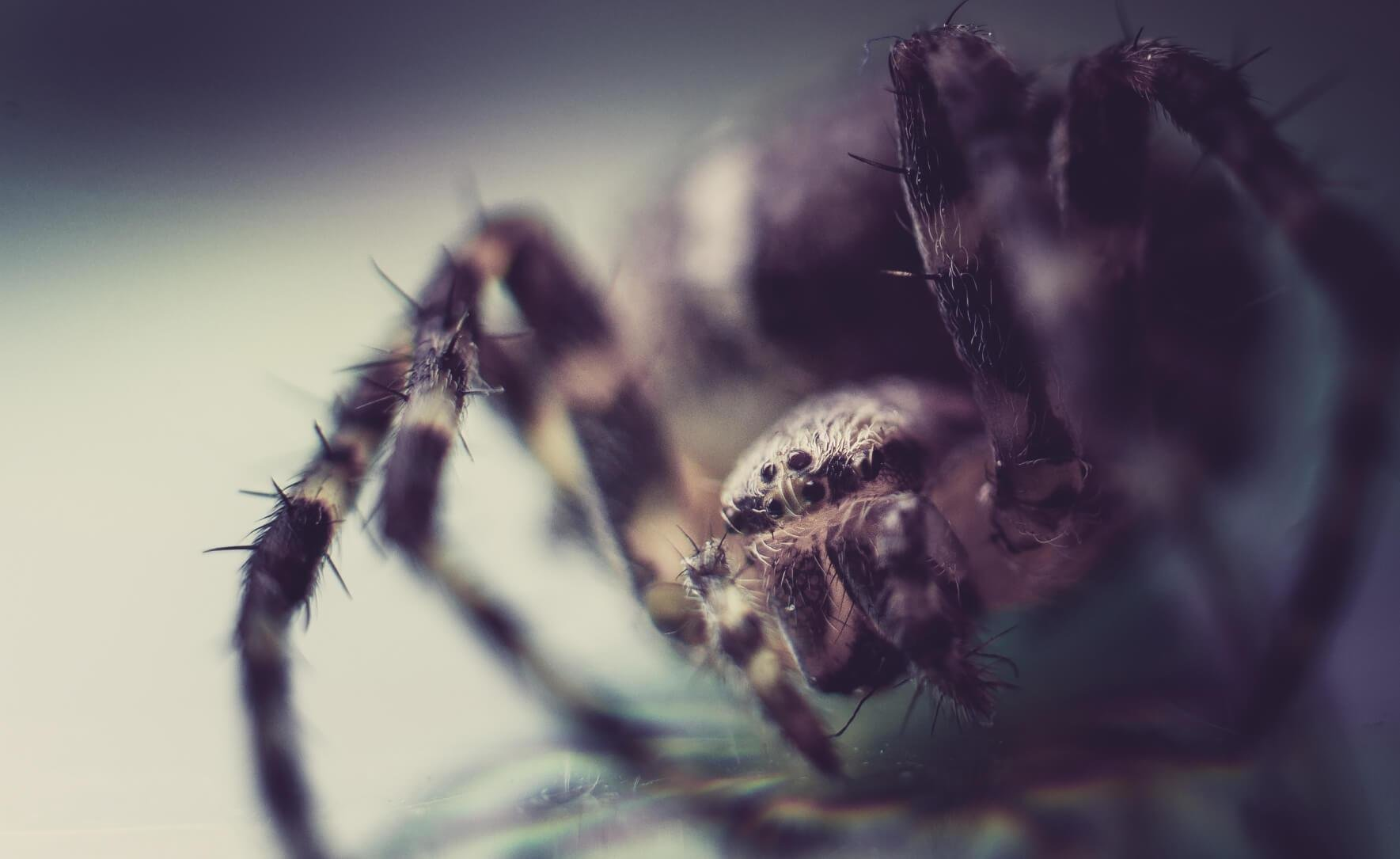 Best 18 Natural Ways To Keep Spiders Out Of Your Home Home With Pictures