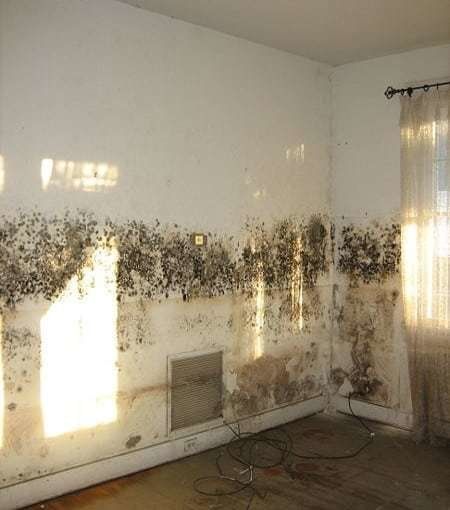 Best 5 Top Tips For Getting Rid Of Damp And Mould Never Paint With Pictures