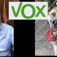 Vídeo | Vox plantea matar a los perros que nadie adopta porque les preocupa el coste que suponen para el Ayuntamiento