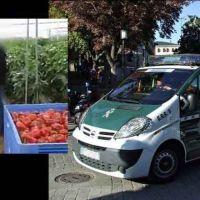 Detenidos 14 empresarios agrícolas en Granada acusados de delitos de explotación laboral