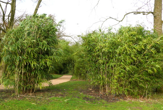 bambus im garten - boisholz, Garten und bauen