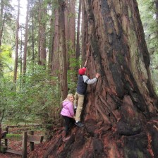Climbing the redwood. (I did not make it to the top.)