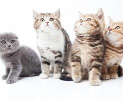 ペット不可で猫などの預かりはできる?預かるとどうなる?