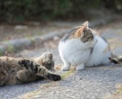 怪我した猫は保護するべき?保護できる場合と保護できない場合