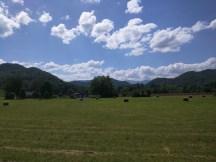 Somewhere between Townsend and Gatlinburg