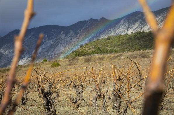 Vignes de Cucugnan. ©ÉricRaz/CCAS