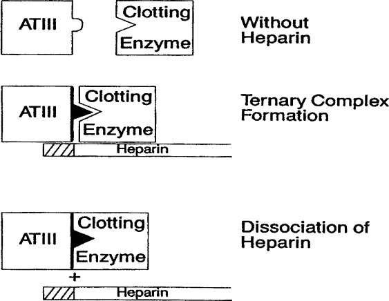 Heparin and Low-Molecular-Weight Heparin Mechanisms of