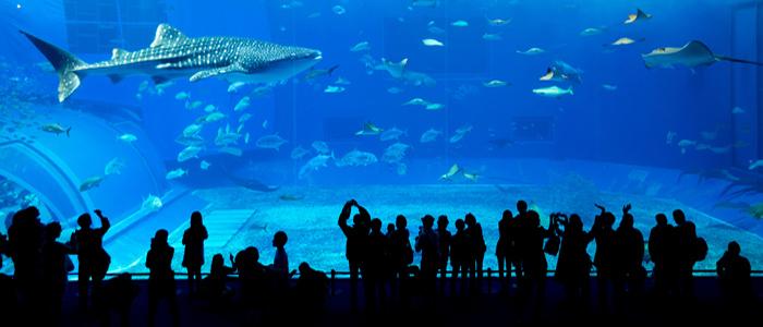 Dubai Underwater zoo and aquarium