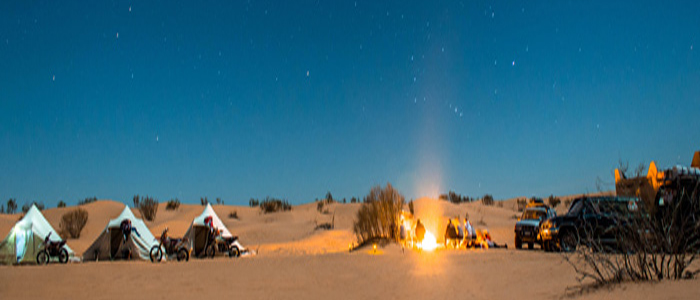 the al qudra desert life