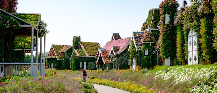 Top Things To Do In Dubai With Family - Miracle Garden