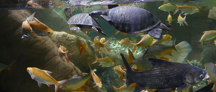 places to visit in Dubai on budget - Aquarium and Underwater Zoo