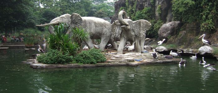 things to do in jakarta with kids_Zoo visit