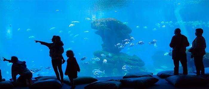 things to do in Mauritius - Blue Safari Submarines