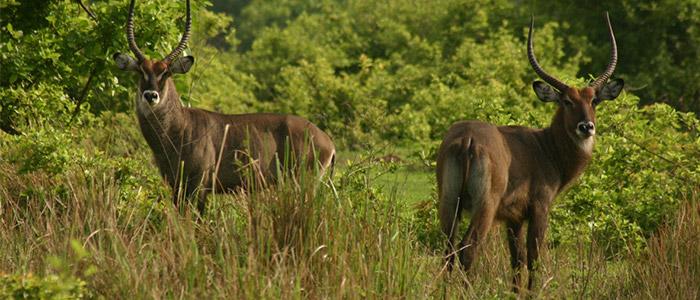 Stroll in Ghana's Largest Wildlife Park