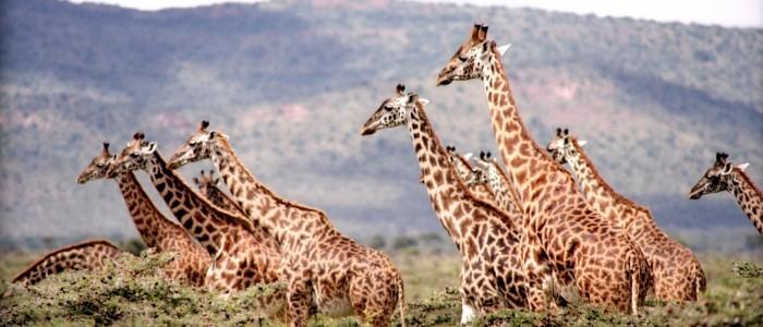 Best Adventure Holidays - African safari