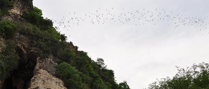 battambang bat caves