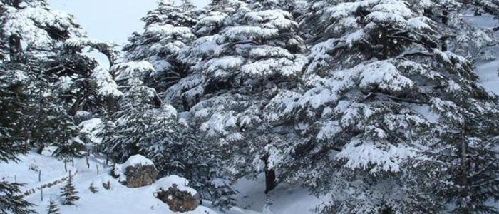 Things to do in Lebanon - Cedars Of God Bsharri