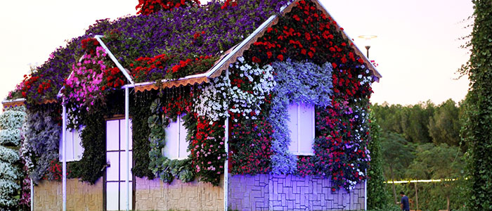 Unusual things to do in Dubai - Dubai Miracle Garden