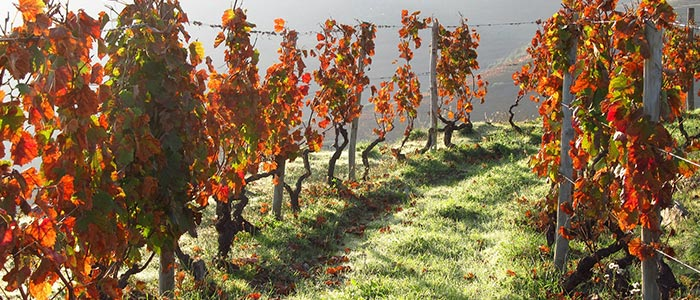 Wine tasting tour Portugal