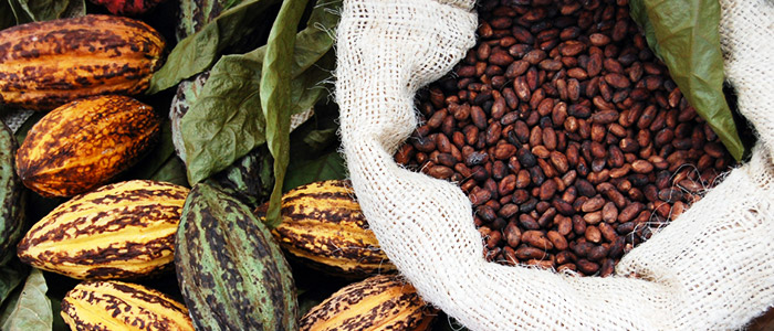 Things To Do In Cote d'Ivoire (Ivory Coast) - Cocoa