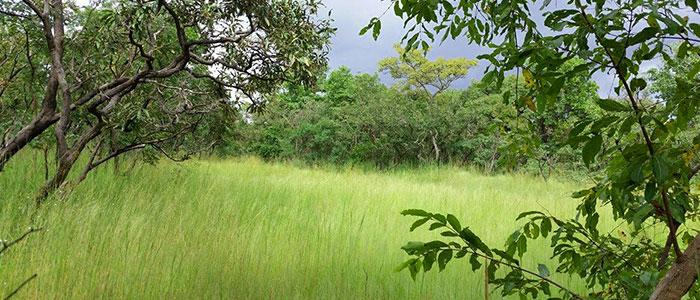 Comoe National Park