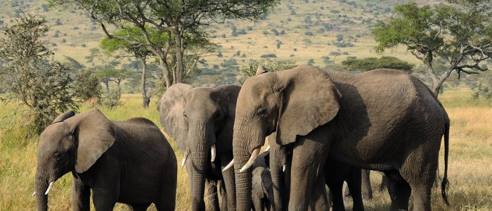 where to travel in January - Serengeti National Park Africa
