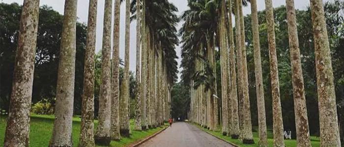 Aburi Botanical Gardens, Ghana