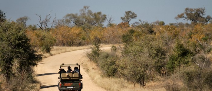 South Africa Safaris: Where To Go? Why Can't You Miss One?
