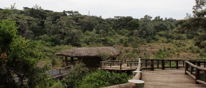 Nairobi Safari Walk
