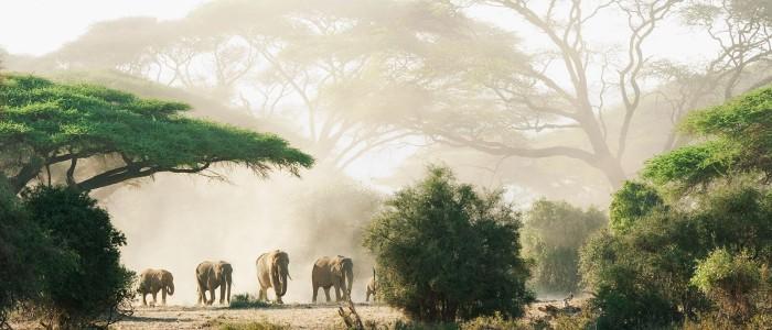 Safari Park Nairobi Tips