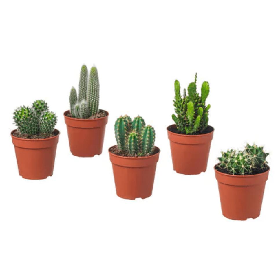 décoration-cactus en pot-ikea