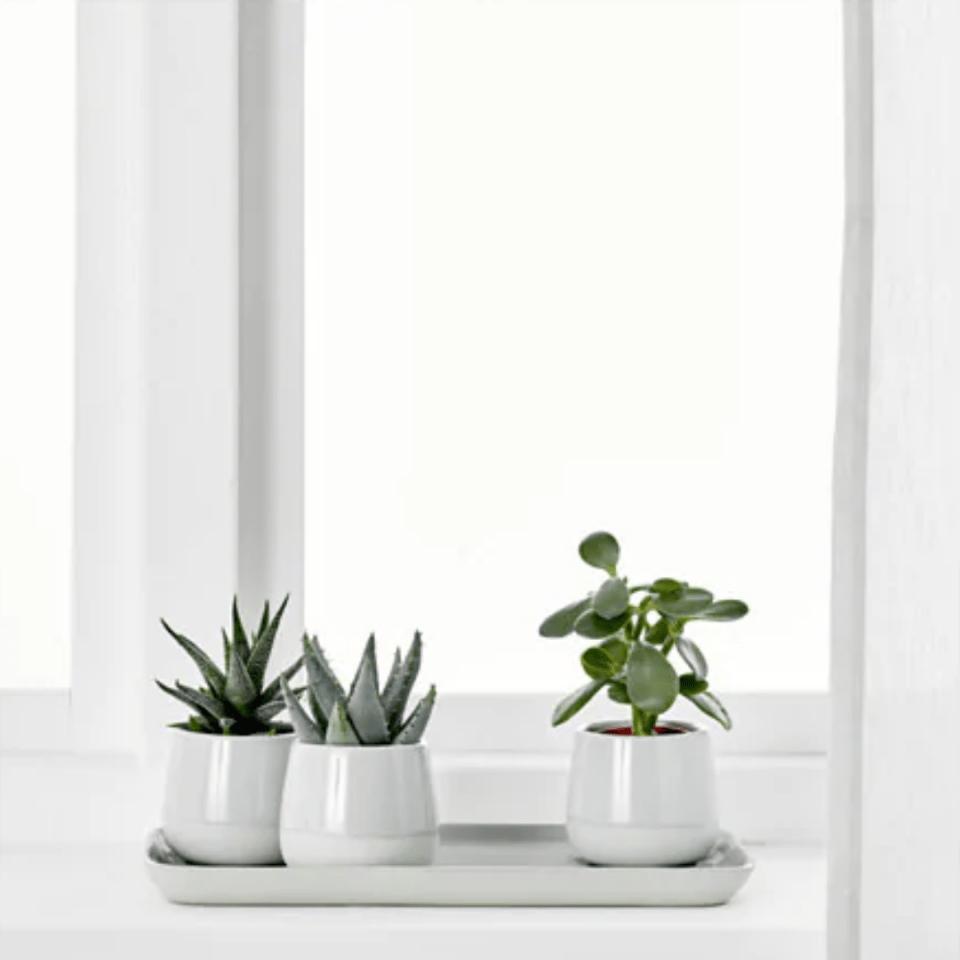 Lot de plantes pour la salle de bain-ikea