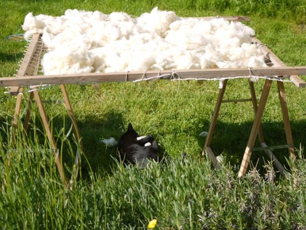 Un petit chat noir qui joue sous le séchoir à laine