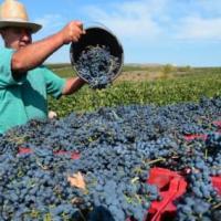 Les vins roumains: des vins à découvrir. #roumanie #vins