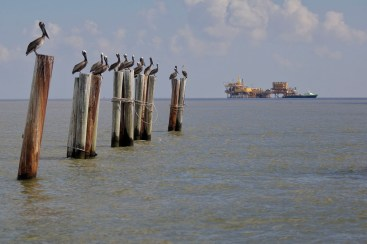 deepwater horizon bp oil spill ecological disaster Louisiana