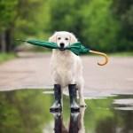 klima-hund