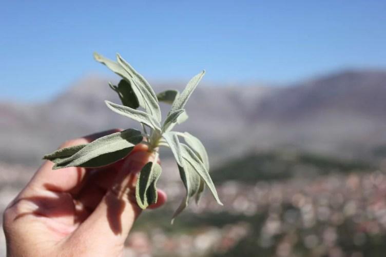 wild-herbs-bosnia