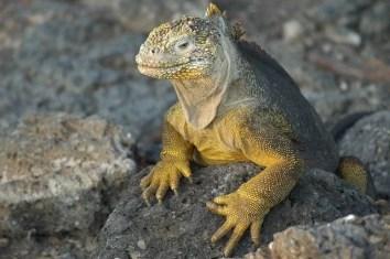 lizard-2113966_640
