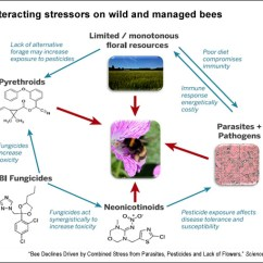 White House Diagram Clarion Cmd6 Wiring What's Behind Bee Declines And Colony Collapse? Latest Science On Stress From Parasites ...