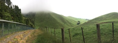 The sharp divide between forest and farmland at Maungatautari's perimeter, with Taylor's Peak rising into cloud (photo credit: Marcela Mendoza Suárez)