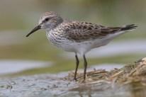 Projected changes in prevailing winds for transatlantic migratory birds under global warming. La Sorte & Fink. http://doi.org/10.1111/1365-2656.12624